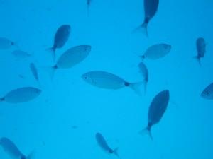 Sous l'eau, au mouillage de Campomoro.