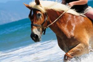 Cheval sur une plage corse